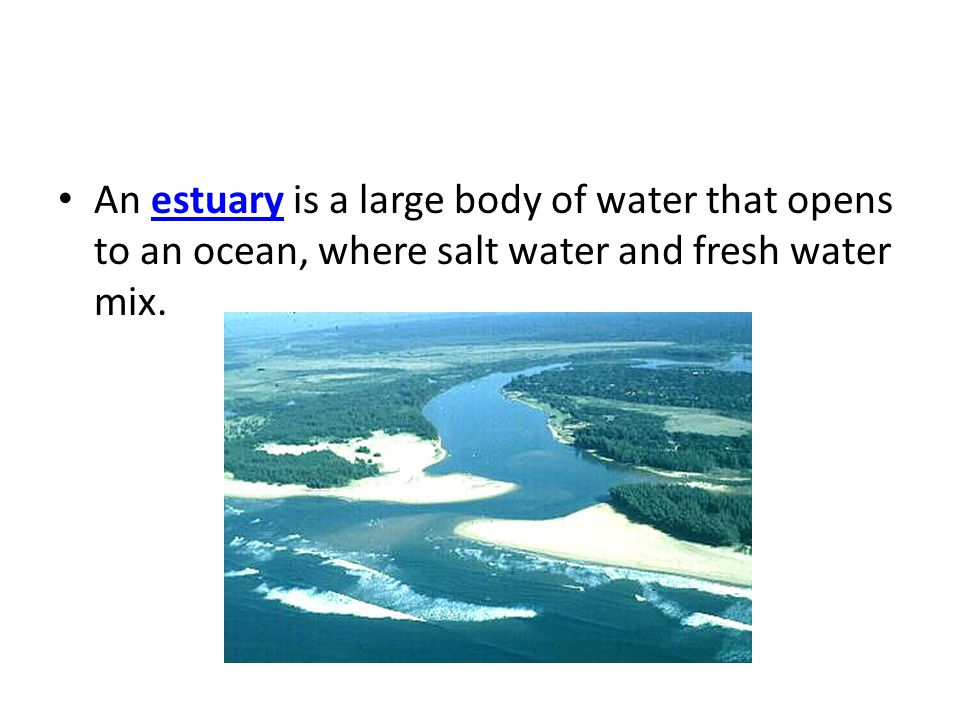 An estuary is a large body of water that opens to an ocean, where salt water and fresh water mix.estuary