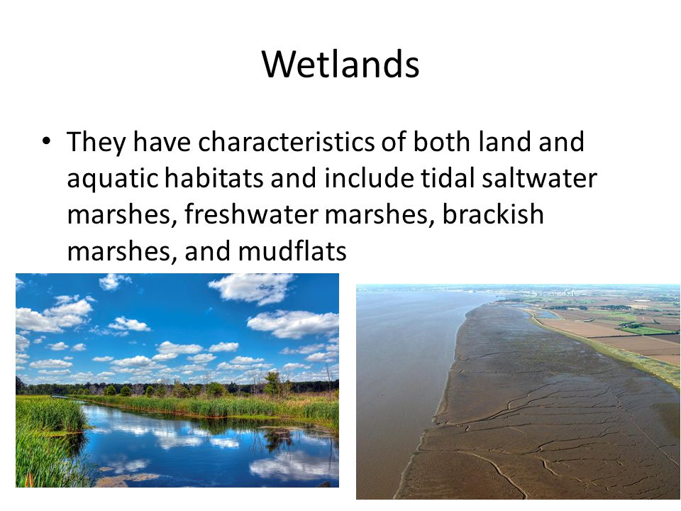 Wetlands They have characteristics of both land and aquatic habitats and include tidal saltwater marshes, freshwater marshes, brackish marshes, and mudflats