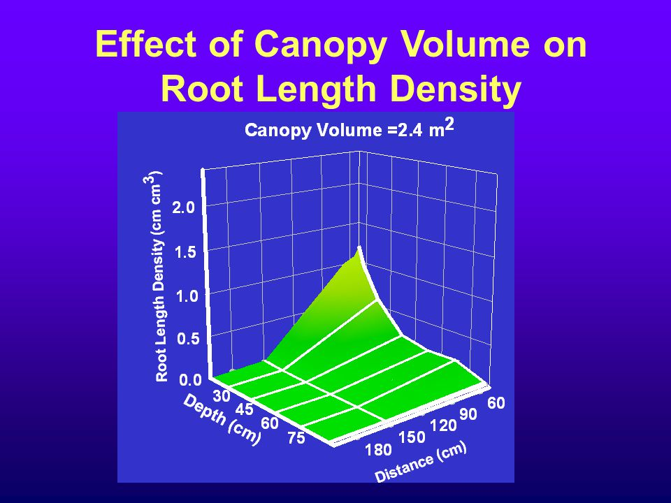 Effect of Canopy Volume on Root Length Density