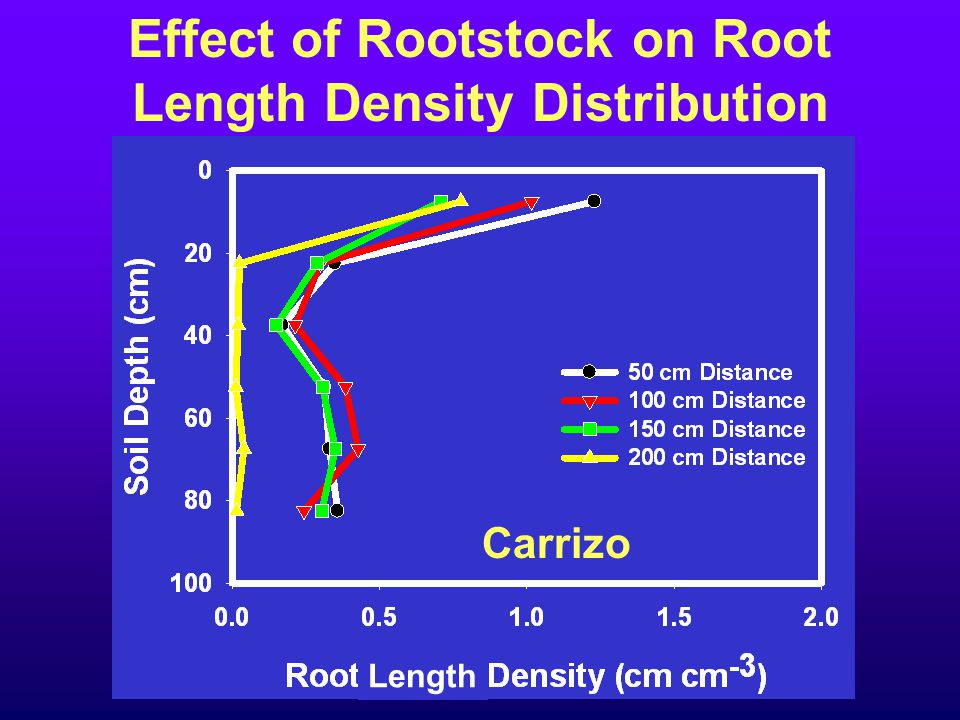 Effect of Rootstock on Root Length Density Distribution Carrizo Length