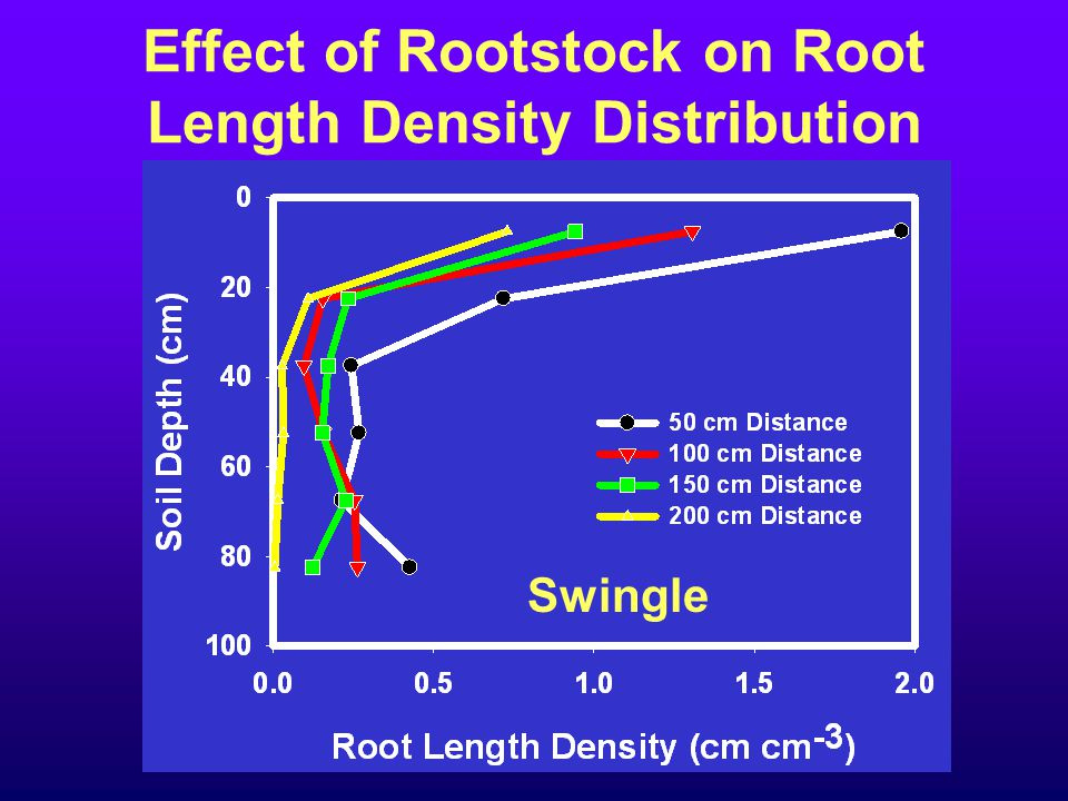 Effect of Rootstock on Root Length Density Distribution Swingle