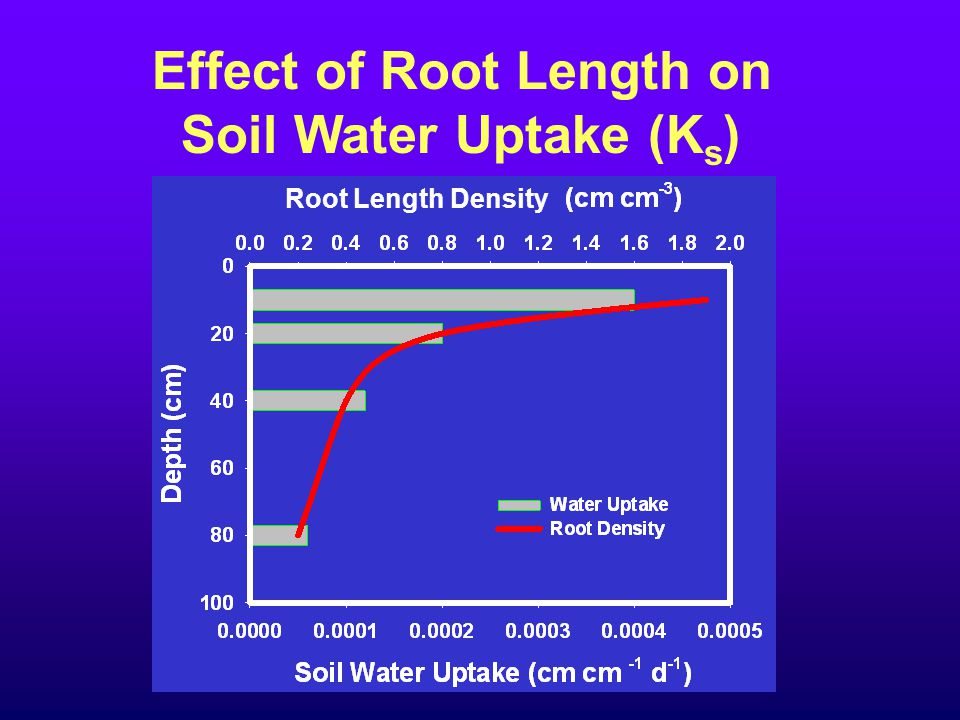Effect of Root Length on Soil Water Uptake (K s ) Root Length Density