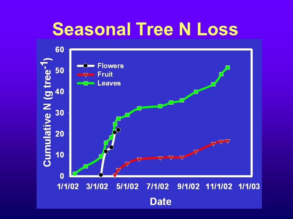 Seasonal Tree N Loss
