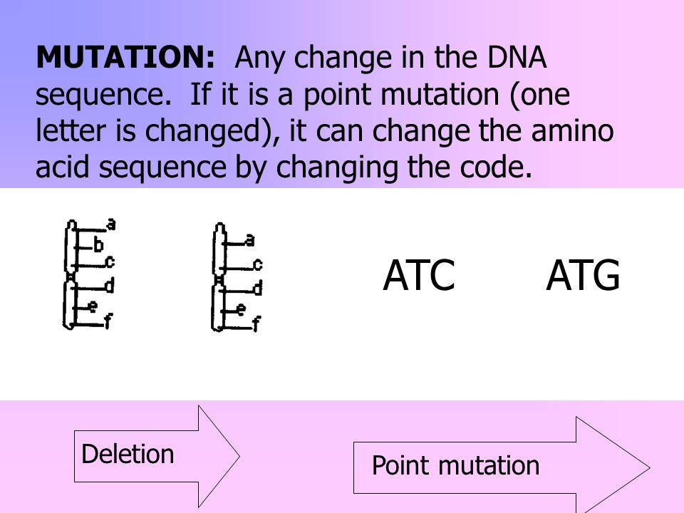 MUTATION: Any change in the DNA sequence. If it is a point mutation (one letter is changed), it can change the amino acid sequence by changing the cod