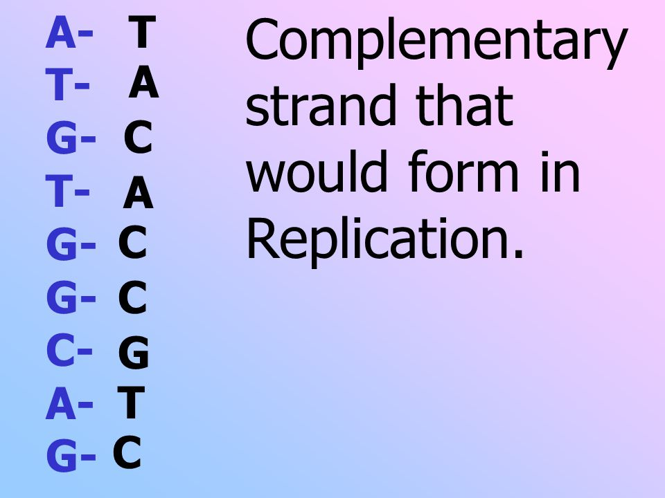 A- T- G- T- G- G- C- A- G- Complementary strand that would form in Replication. T A C A C C C G T