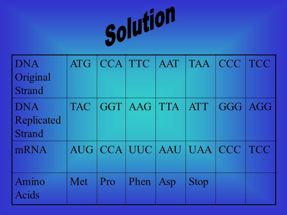 DNA Original Strand ATGCCATTCAATTAACCCTCC DNA Replicated Strand TACGGTAAGTTAATTGGGAGG mRNAAUGCCAUUCAAUUAACCCTCC Amino Acids MetProPhenAspStop