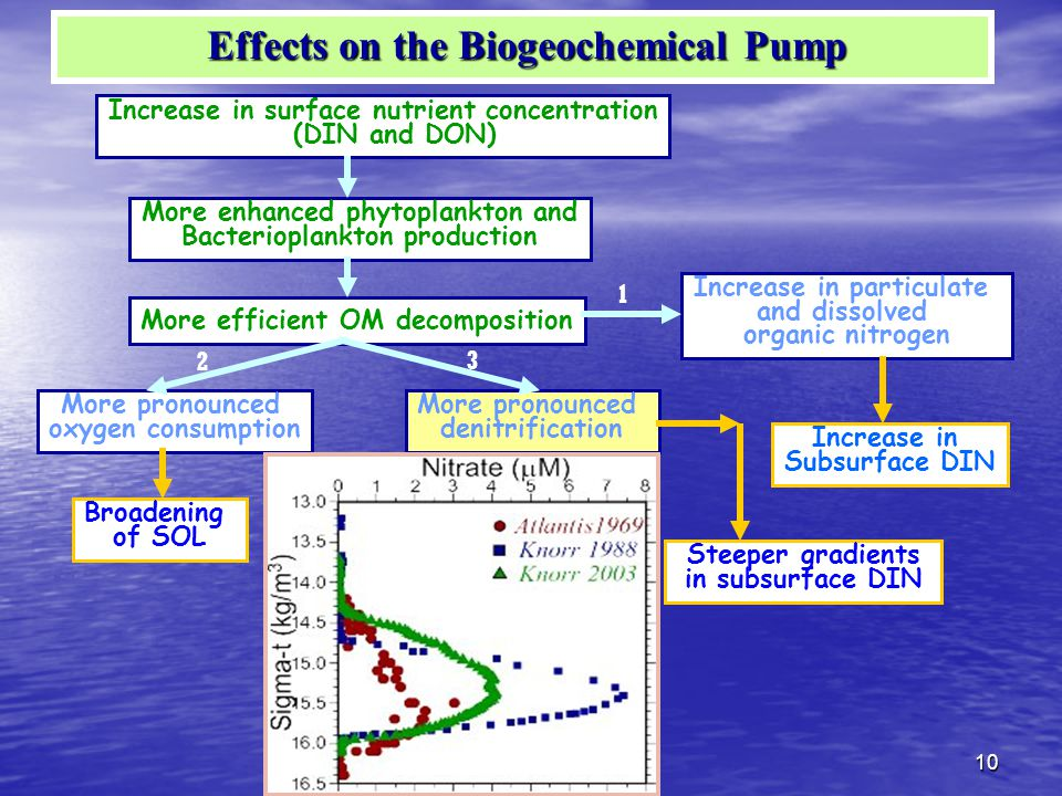 10 Increase in surface nutrient concentration (DIN and DON) More enhanced phytoplankton and Bacterioplankton production Increase in particulate and dissolved organic nitrogen More efficient OM decomposition Increase in Subsurface DIN More pronounced denitrification Steeper gradients in subsurface DIN More pronounced oxygen consumption Broadening of SOL 1 3 2 Effects on the Biogeochemical Pump Effects on the Biogeochemical Pump