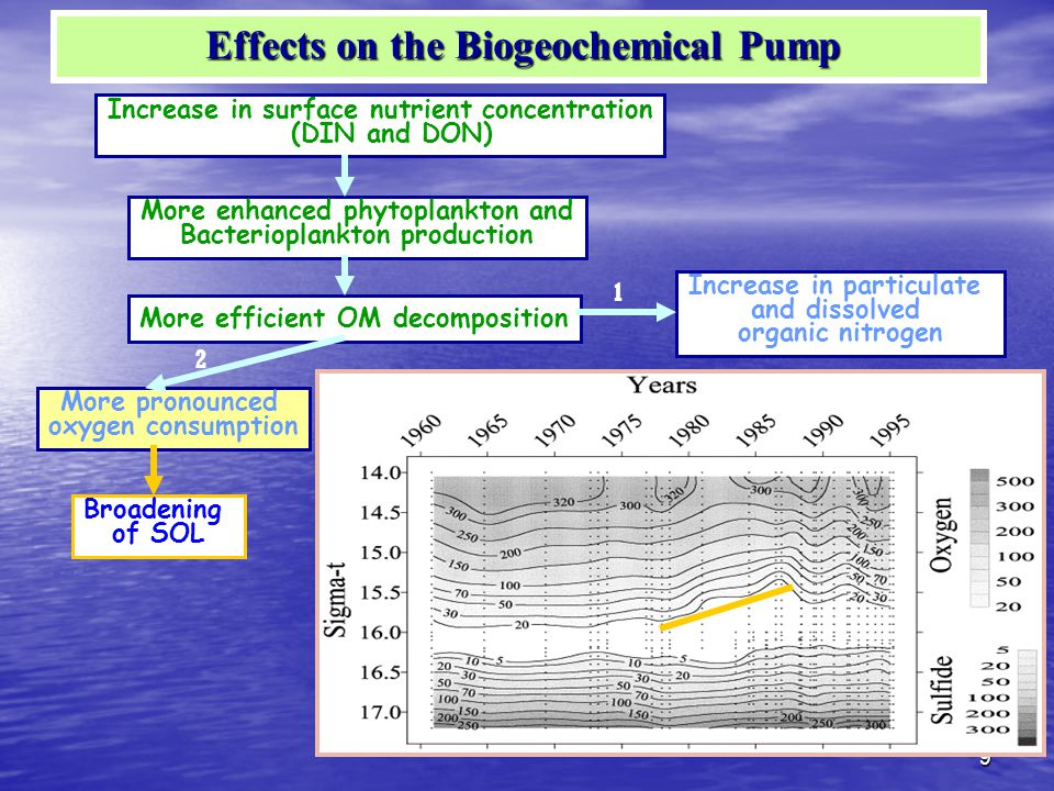 9 Increase in surface nutrient concentration (DIN and DON) More enhanced phytoplankton and Bacterioplankton production Increase in particulate and dissolved organic nitrogen More efficient OM decomposition Increase in Subsurface DIN More pronounced oxygen consumption Broadening of SOL 1 2 Effects on the Biogeochemical Pump Effects on the Biogeochemical Pump