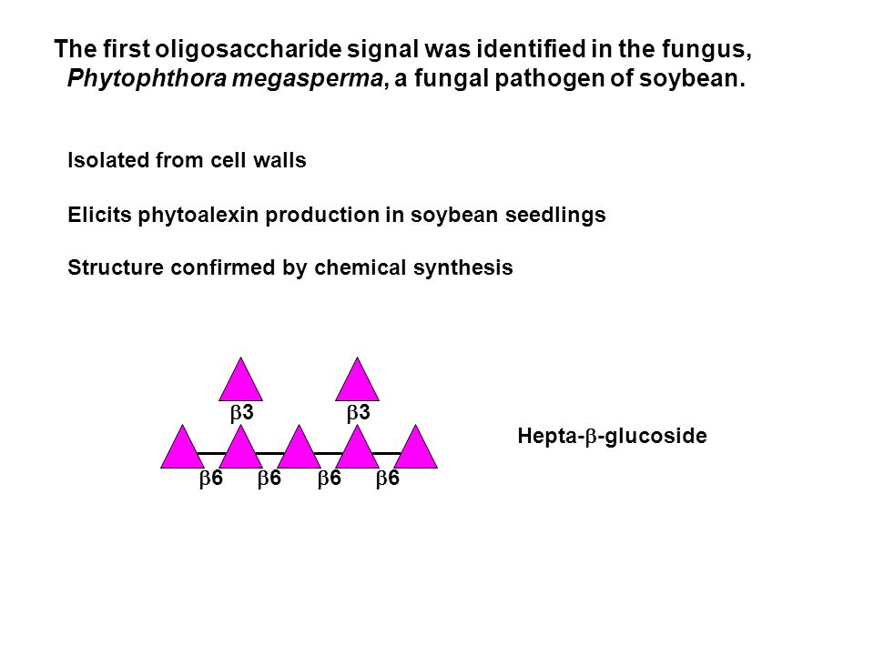 33 66 66 66 66 33 Isolated from cell walls Elicits phytoalexin production in soybean seedlings Structure confirmed by chemical synthesis Hepta-  -glucoside The first oligosaccharide signal was identified in the fungus, Phytophthora megasperma, a fungal pathogen of soybean.
