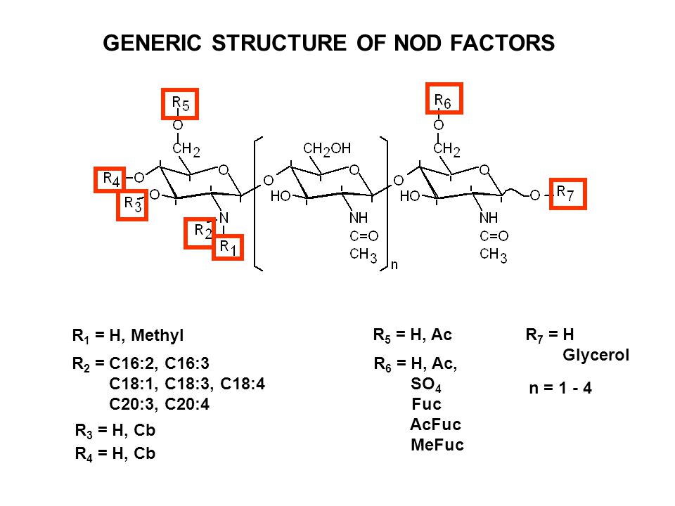 GENERIC STRUCTURE OF NOD FACTORS R 1 = H, Methyl R 2 = C16:2, C16:3 C18:1, C18:3, C18:4 C20:3, C20:4 R 3 = H, Cb R 4 = H, Cb R 5 = H, Ac R 6 = H, Ac,