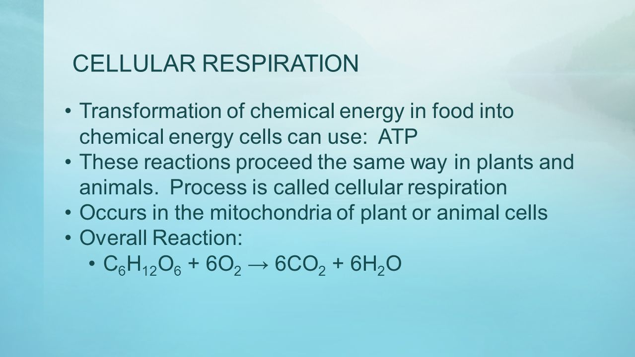 CELLULAR RESPIRATION Transformation of chemical energy in food into chemical energy cells can use: ATP These reactions proceed the same way in plants
