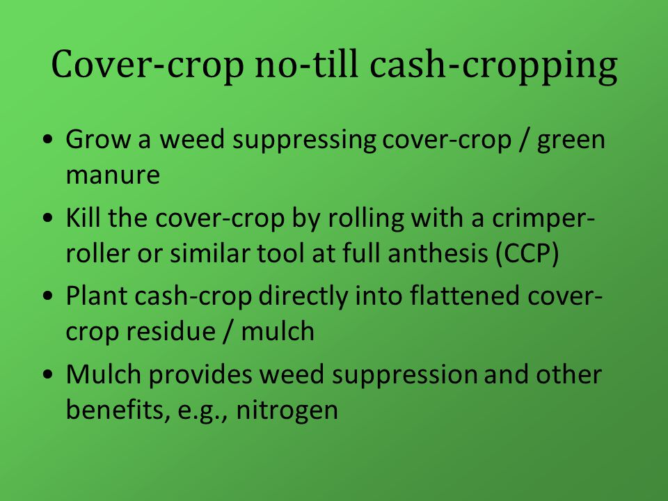 Cover-crop no-till cash-cropping Grow a weed suppressing cover-crop / green manure Kill the cover-crop by rolling with a crimper- roller or similar tool at full anthesis (CCP) Plant cash-crop directly into flattened cover- crop residue / mulch Mulch provides weed suppression and other benefits, e.g., nitrogen