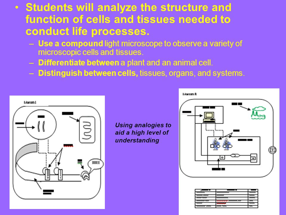 Students will analyze the structure and function of cells and tissues needed to conduct life processes.