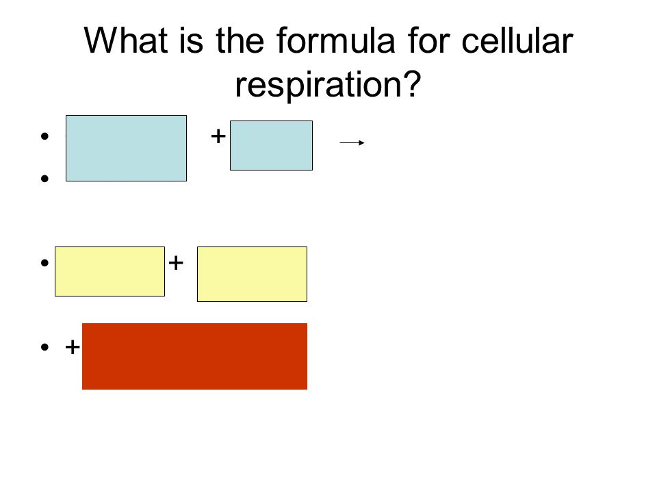 What is the formula for cellular respiration C 6 H 12 O 6 + 6 O 2 6 CO 2 + 6 H2O + ATP