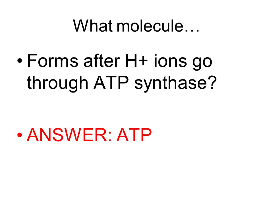 What molecule… Forms after H+ ions go through ATP synthase ANSWER: ATP