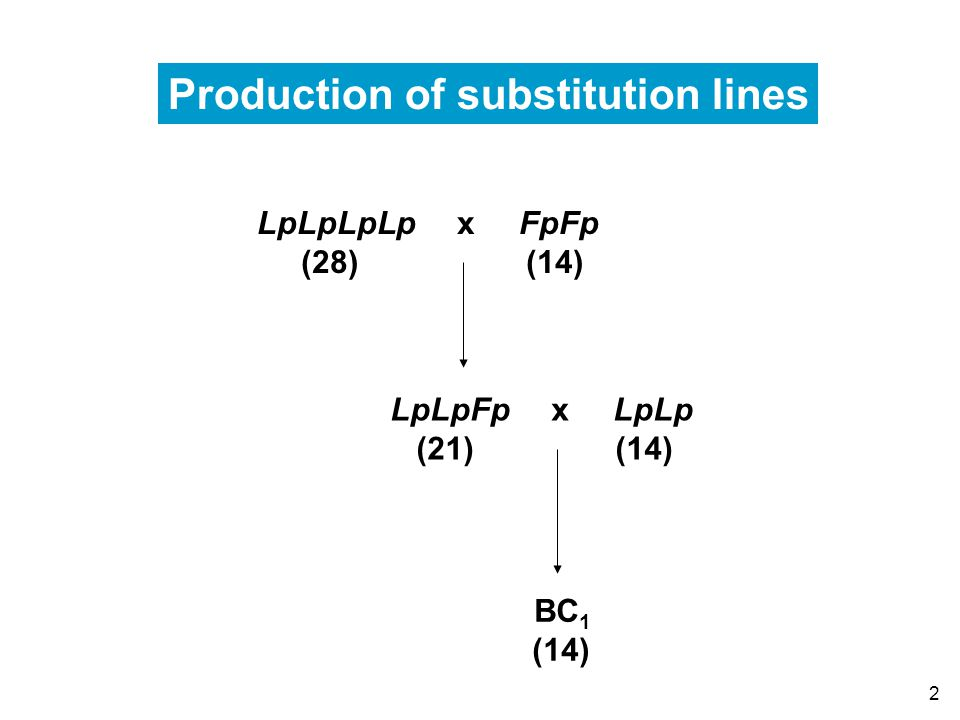 2 LpLpLpLp x FpFp (28) (14) LpLpFp x LpLp (21) (14) BC 1 (14) Production of substitution lines
