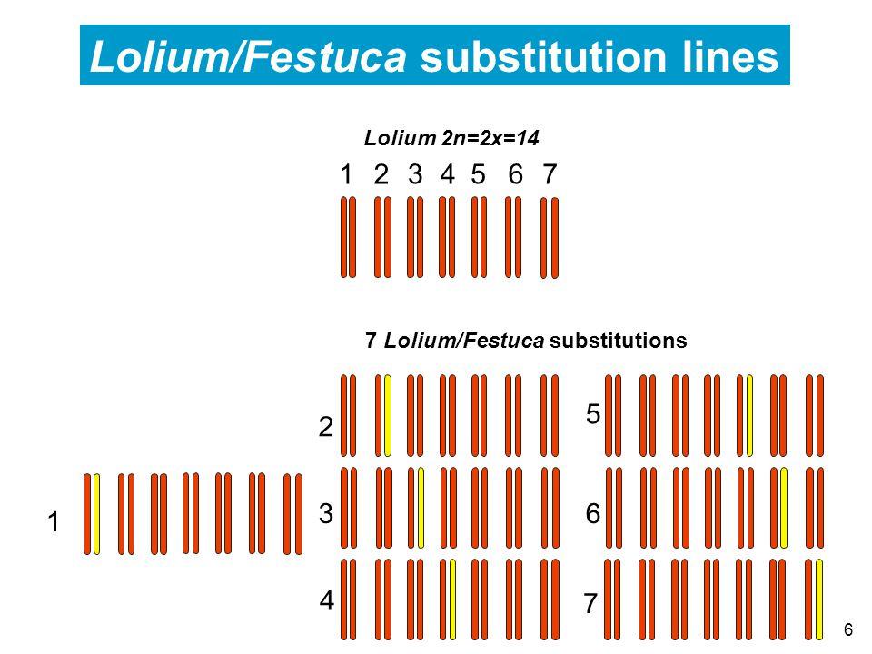6 Lolium 2n=2x=14 7 Lolium/Festuca substitutions Lolium/Festuca substitution lines 1 2 3 4 5 6 7 12 3 4 56 7