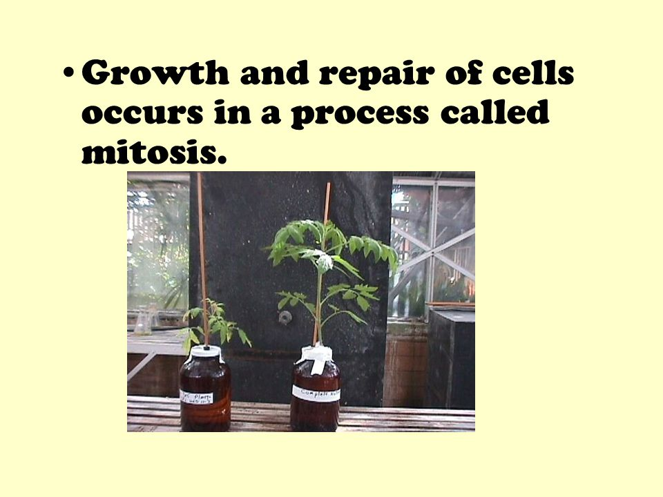 Growth and repair of cells occurs in a process called mitosis.