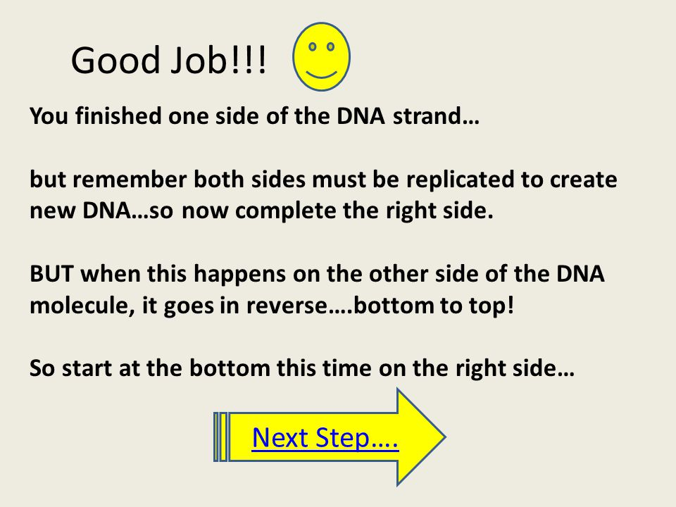 Good Job!!! You finished one side of the DNA strand… but remember both sides must be replicated to create new DNA…so now complete the right side. BUT
