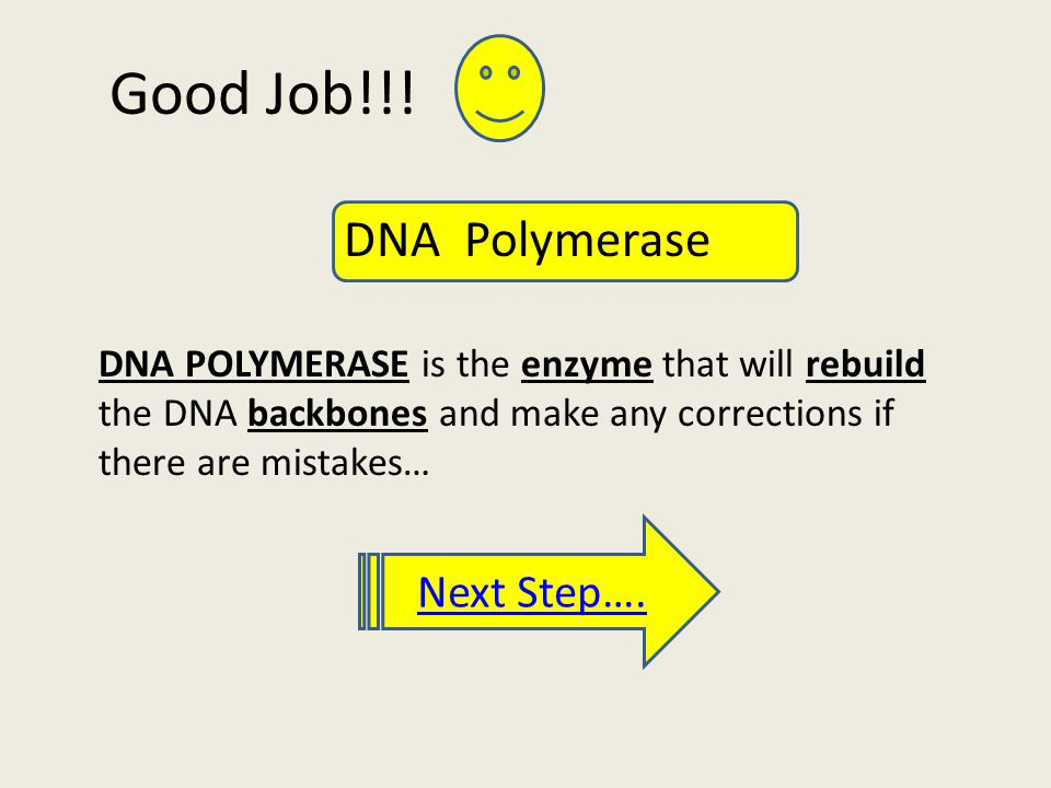 Good Job!!! DNA POLYMERASE is the enzyme that will rebuild the DNA backbones and make any corrections if there are mistakes… Next Step…. DNA Polymeras