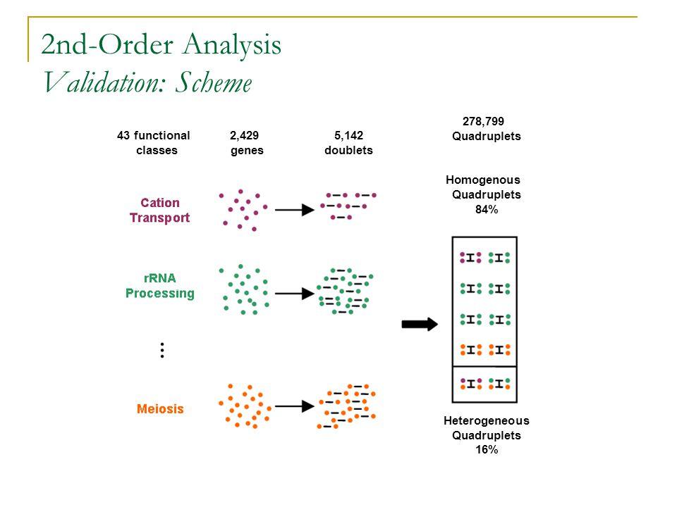 43 functional classes 2,429 genes 5,142 doublets 278,799 Quadruplets Homogenous Quadruplets 84% Heterogeneous Quadruplets 16% 2nd-Order Analysis Validation: Scheme