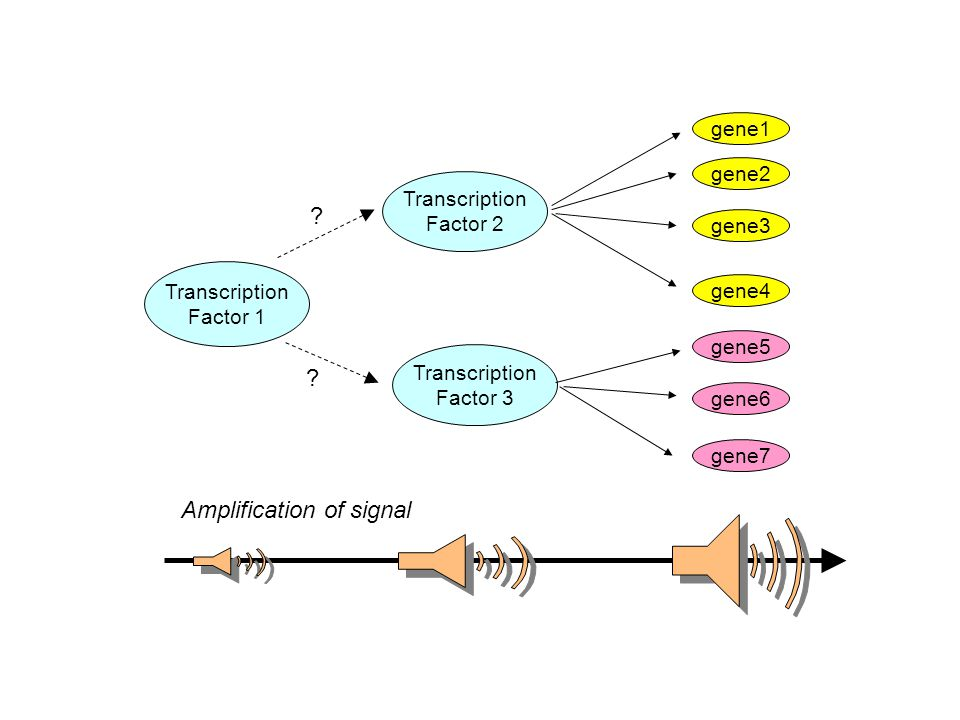 Transcription Factor 1 Transcription Factor 3 Transcription Factor 2 gene1 gene2 gene3 gene5 gene4 gene6 gene7 Amplification of signal ? ?