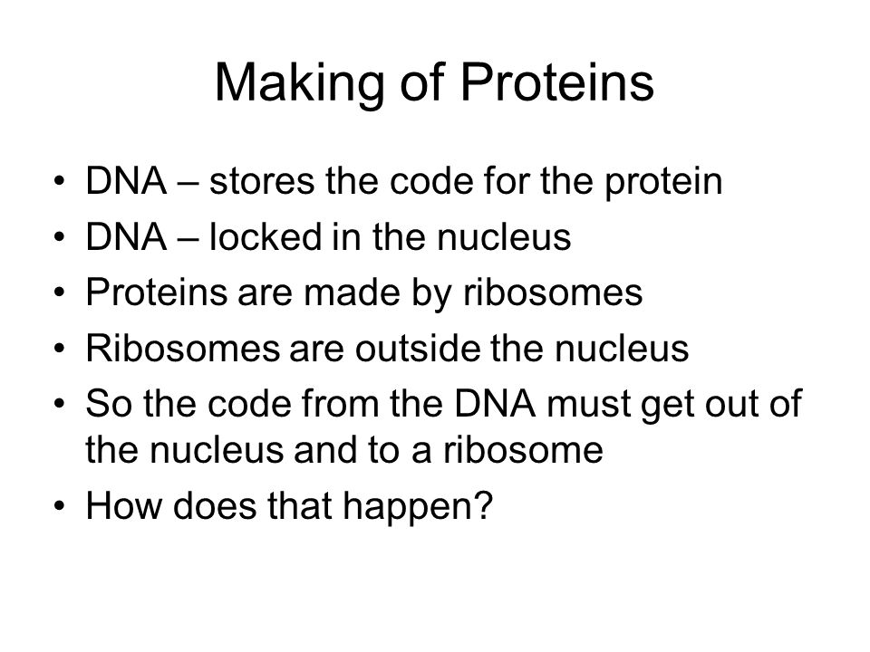 Making of Proteins DNA – stores the code for the protein DNA – locked in the nucleus Proteins are made by ribosomes Ribosomes are outside the nucleus