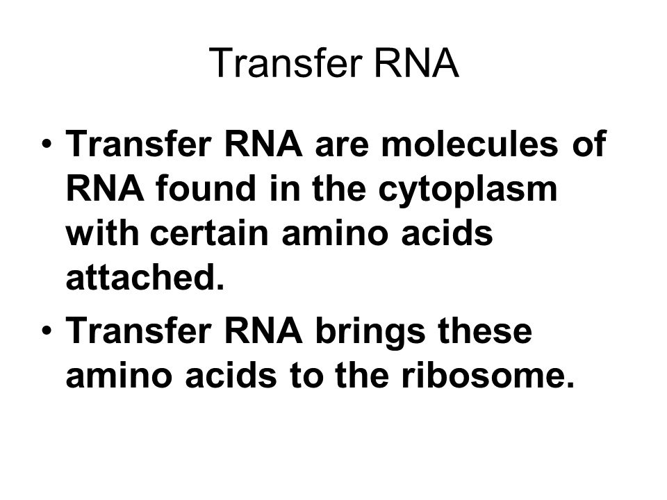 Transfer RNA Transfer RNA are molecules of RNA found in the cytoplasm with certain amino acids attached. Transfer RNA brings these amino acids to the