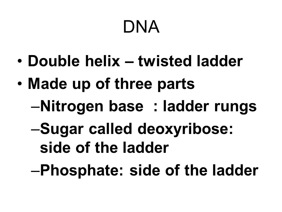 DNA Double helix – twisted ladder Made up of three parts –Nitrogen base : ladder rungs –Sugar called deoxyribose: side of the ladder –Phosphate: side