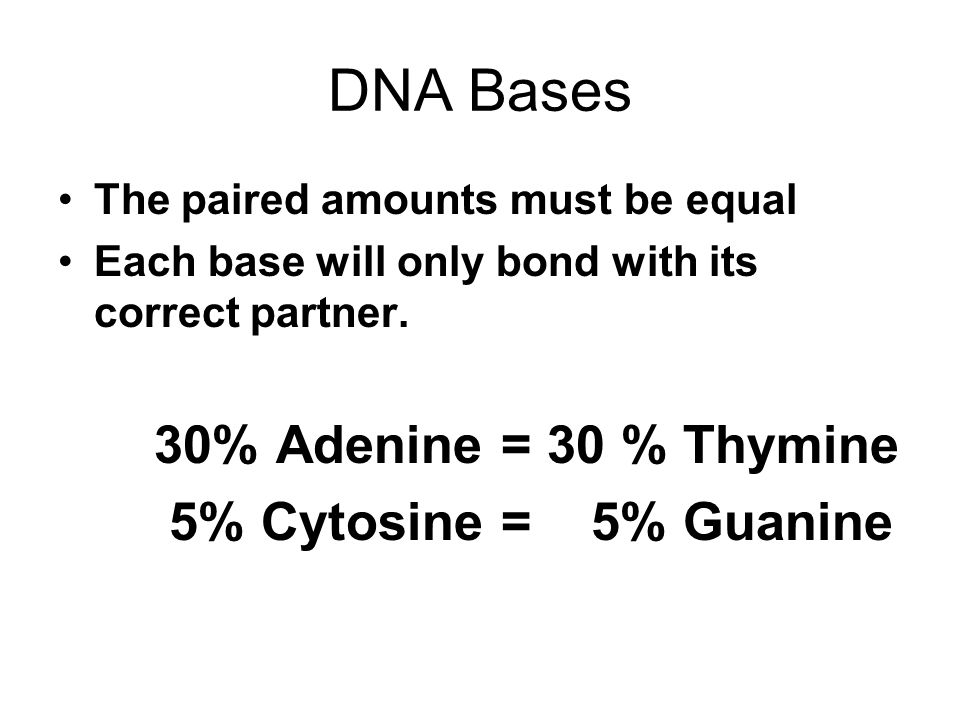 DNA Bases The paired amounts must be equal Each base will only bond with its correct partner. 30% Adenine = 30 % Thymine 5% Cytosine = 5% Guanine