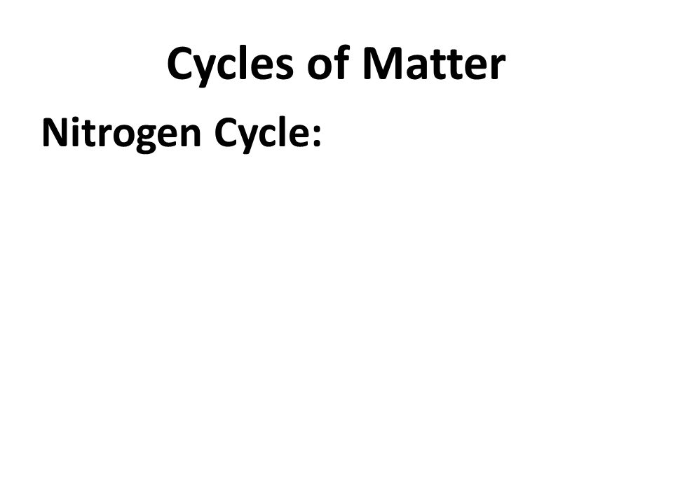 Cycles of Matter Nitrogen Cycle: