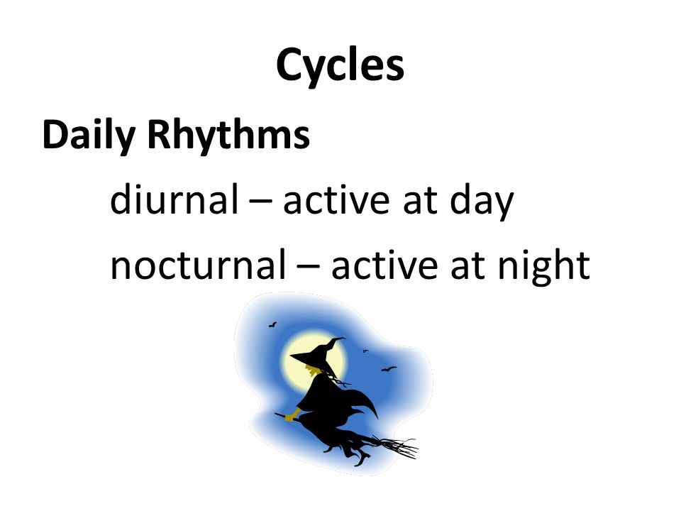 Cycles Daily Rhythms diurnal – active at day nocturnal – active at night