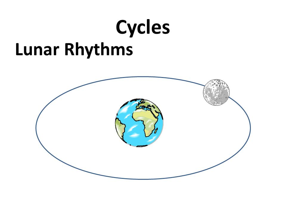 Cycles Lunar Rhythms