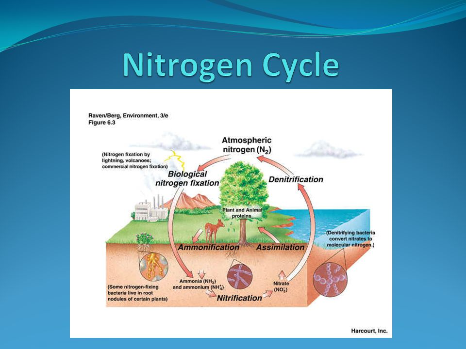 Atmosphere 78% of the atmosphere is nitrogen Plants and animals cannot use the nitro gen in the atmosphere