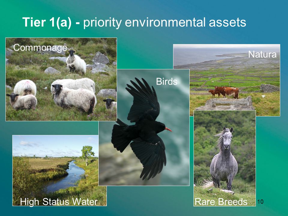 Tier 1(a) - priority environmental assets 10 Commonage Birds High Status WaterRare Breeds Natura
