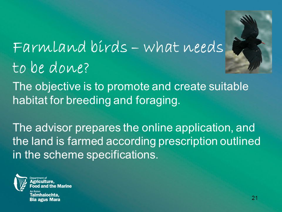 Farmland birds – what needs to be done.