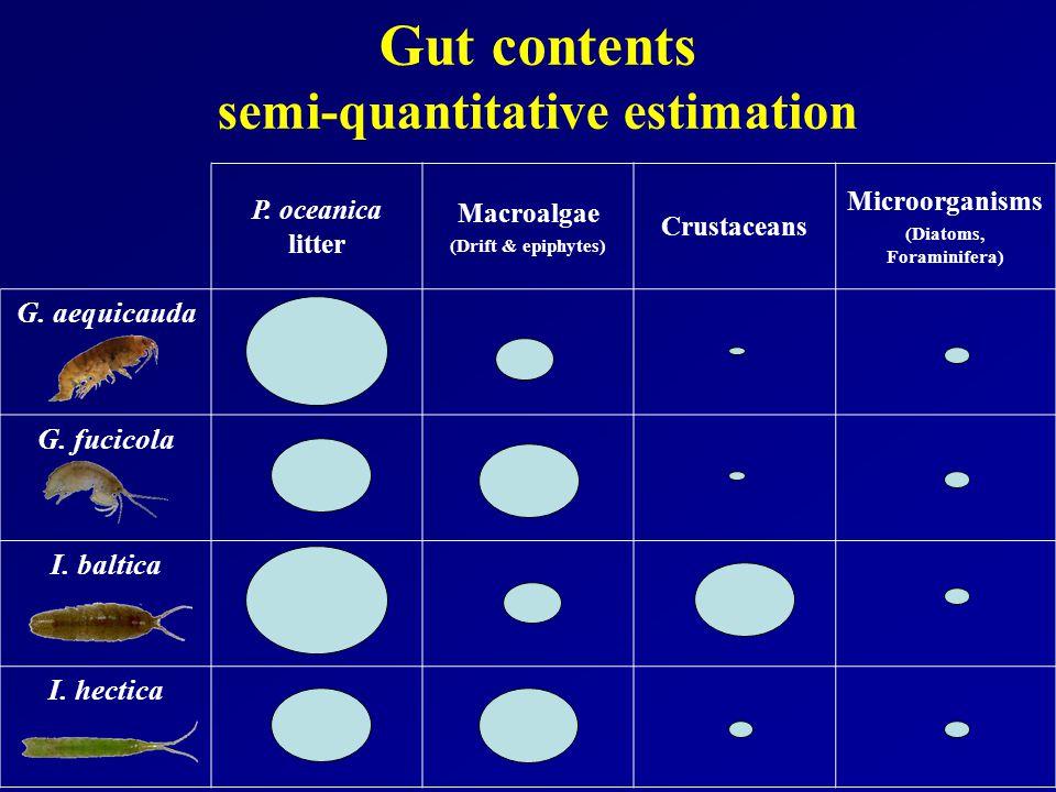 Gut contents semi-quantitative estimation P.