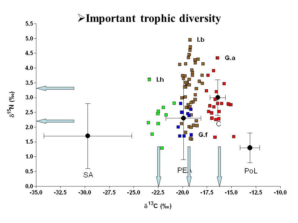  Important trophic diversity