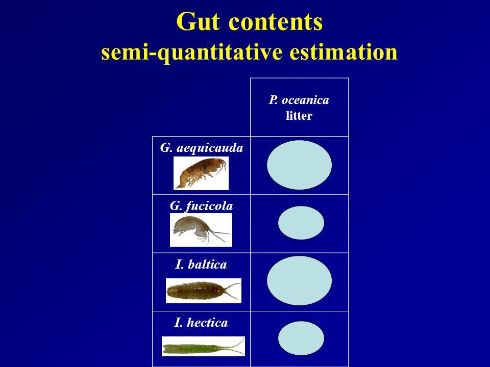 Gut contents semi-quantitative estimation P. oceanica litter G. aequicauda G. fucicola I. baltica I. hectica
