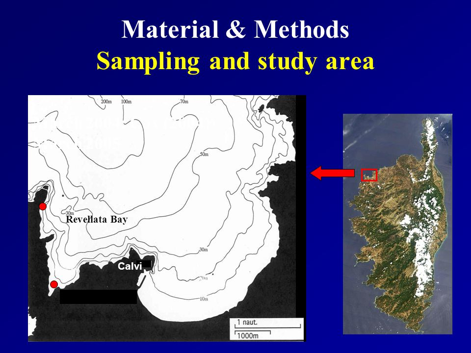 Material & Methods Sampling and study area Calvi Revellata Bay March 2004: Cox (2004) March 2005