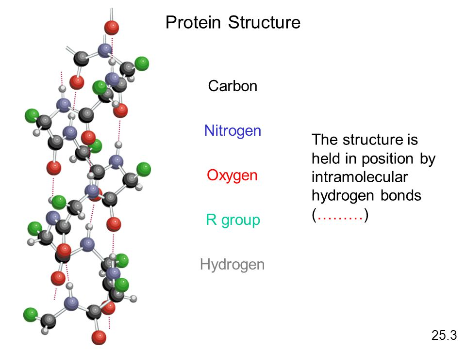 Protein Structure 25.3 Carbon Nitrogen Oxygen R group Hydrogen The structure is held in position by intramolecular hydrogen bonds (………)
