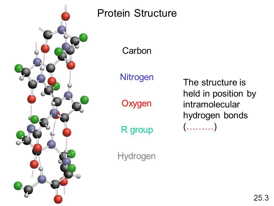 Protein Structure 25.3 Carbon Nitrogen Oxygen R group Hydrogen The structure is held in position by intramolecular hydrogen bonds (………)