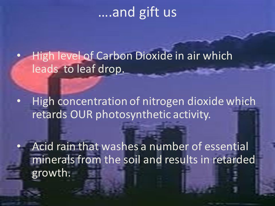 ….and gift us High level of Carbon Dioxide in air which leads to leaf drop.