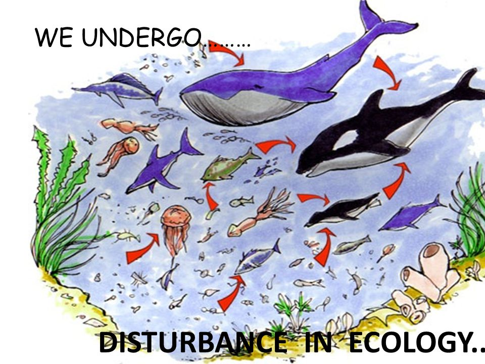 WE UNDERGO……… DISTURBANCE IN ECOLOGY..