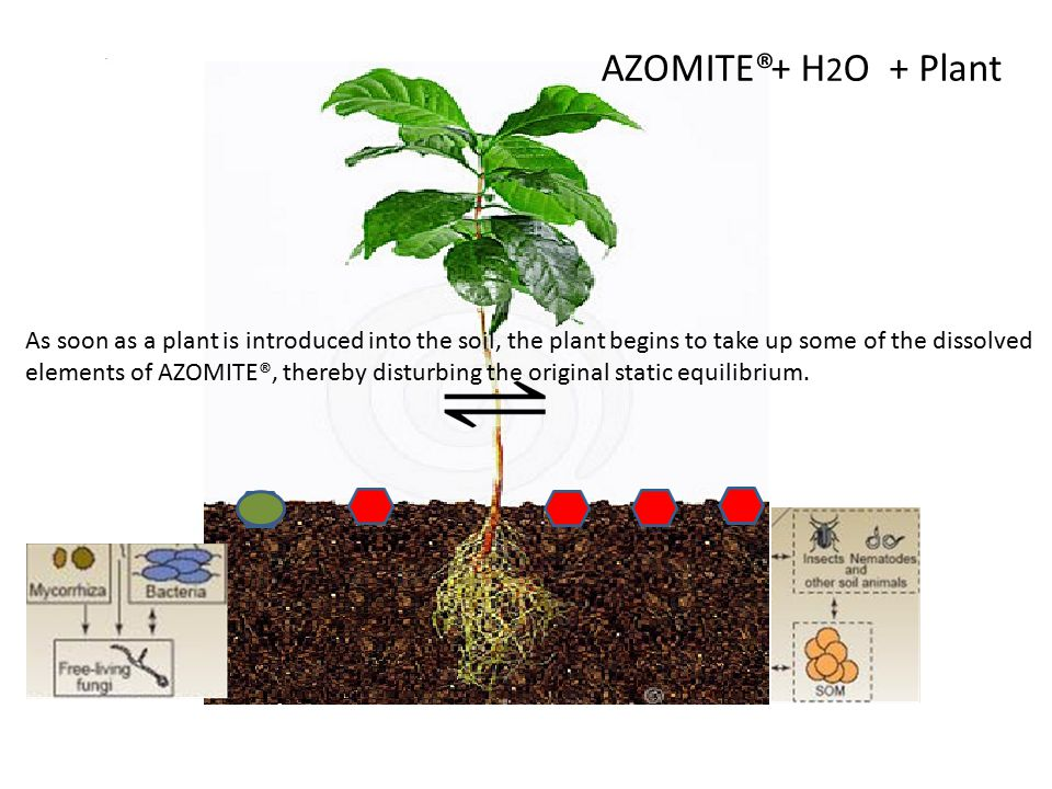 AZOMITE® STATIC EQUILIBRIUM When only AZOMITE® and moisture are present in the soil, a static equilibrium is established, in which the majority of the AZOMITE® is present as a solid, and the minor amount is present as a solution of the AZOMITE® elements.