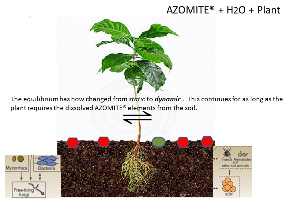 AZOMITE® + H 2 O + Plant In order to try to restore the static equilibrium, more AZOMITE® dissolves, but only at the rate, and to the extent, required
