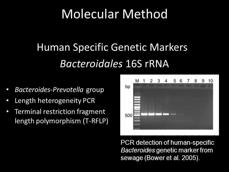 Molecular Method Human Specific Genetic Markers Bacteroidales 16S rRNA Bacteroides-Prevotella group Length heterogeneity PCR Terminal restriction fragment length polymorphism (T-RFLP) PCR detection of human-specific Bacteroides genetic marker from sewage (Bower et al.