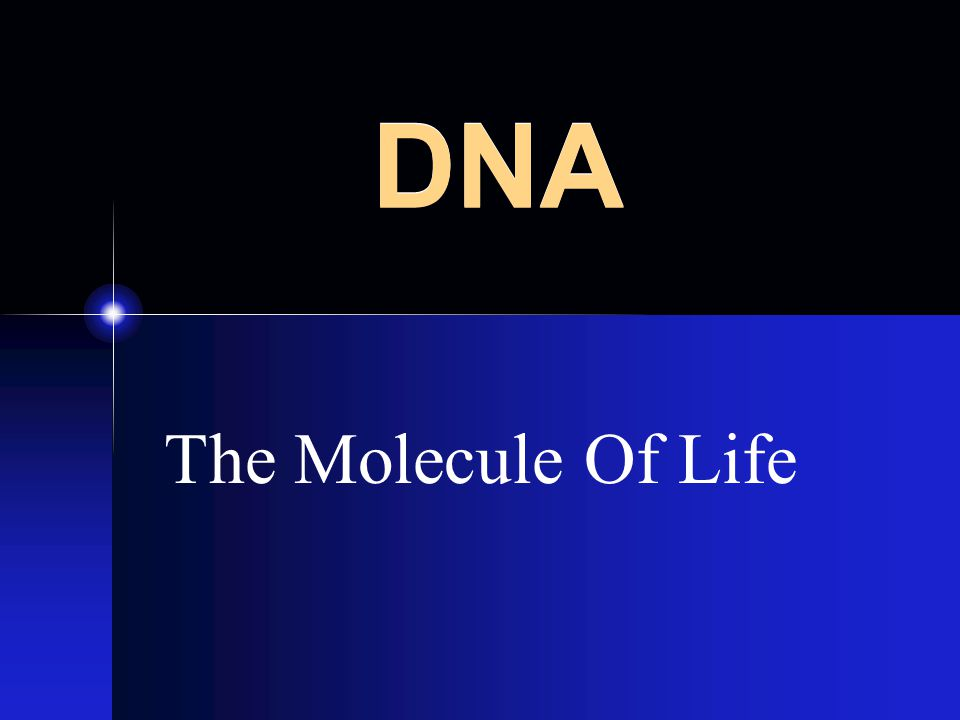 DNA The Molecule Of Life