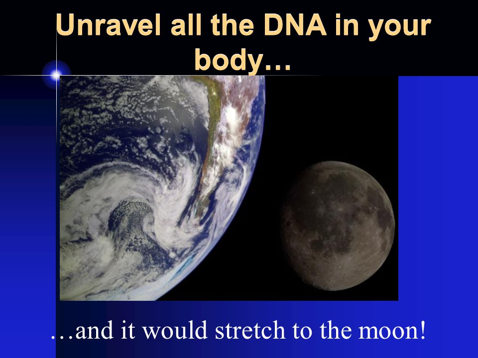 Unravel all the DNA in your body… …and it would stretch to the moon!