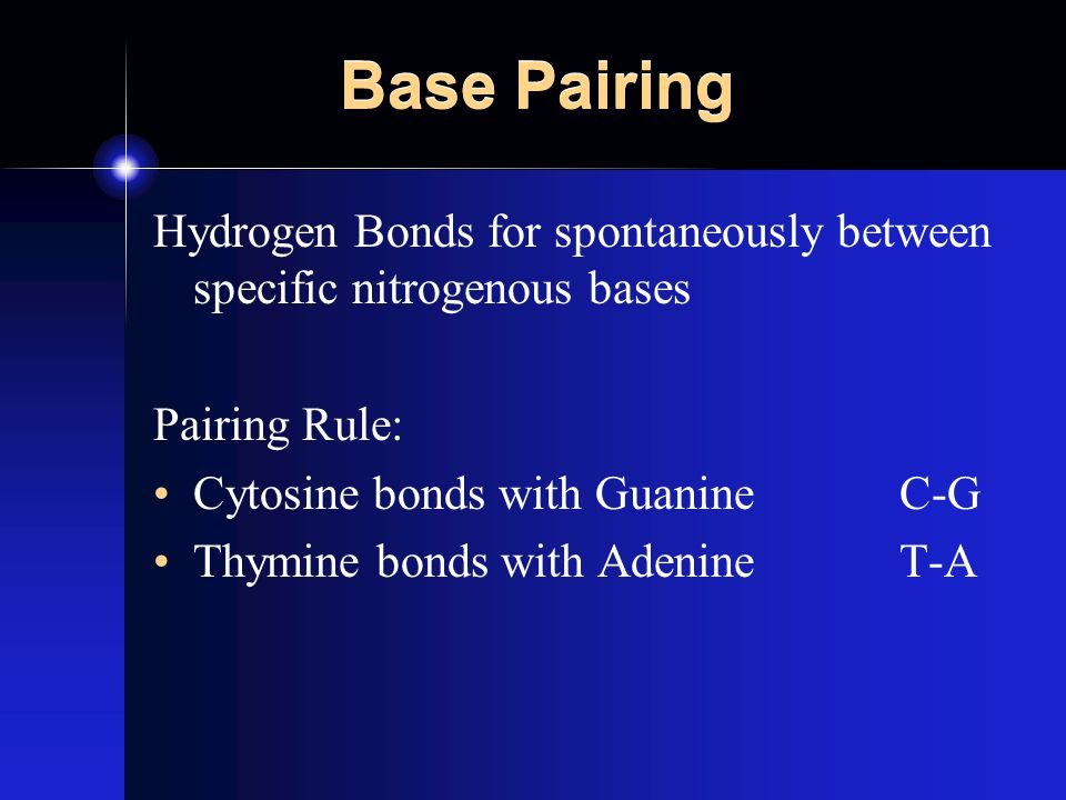 Base Pairing Hydrogen Bonds for spontaneously between specific nitrogenous bases Pairing Rule: Cytosine bonds with GuanineC-G Thymine bonds with AdenineT-A